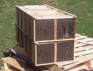 Multiple packages ready for installation onto hives