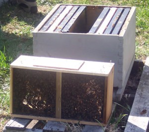 Package next to a hive